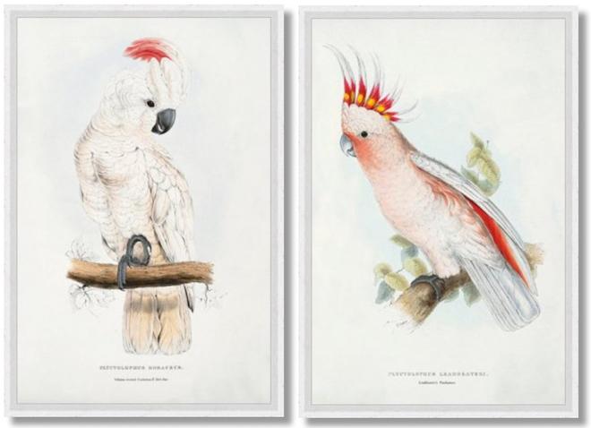 edward-lears-parrots