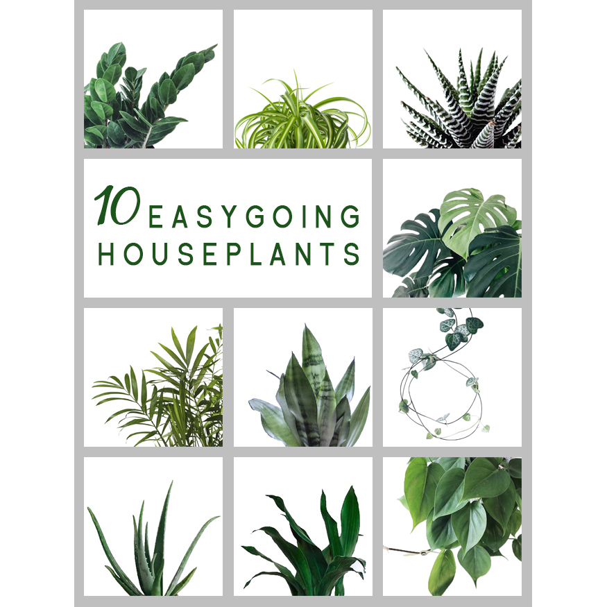 10 Of The Most Easygoing Houseplants
