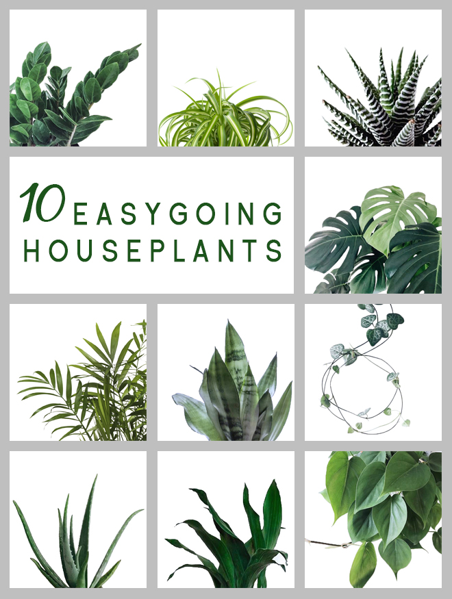 10 easygoing hard to kill plants
