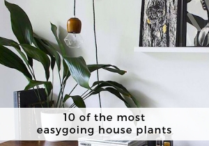 The most easygoing house plants
