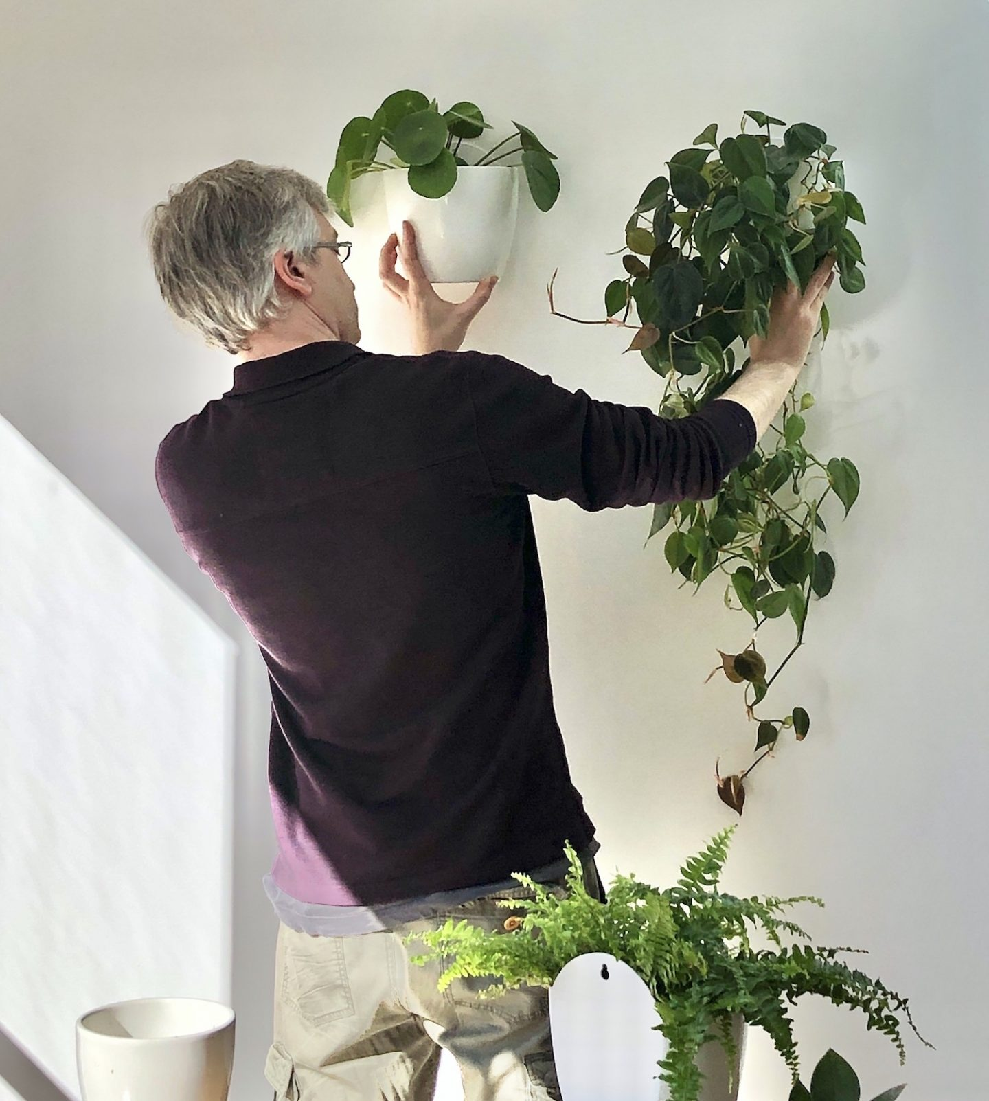 How to create an indoor plant wall